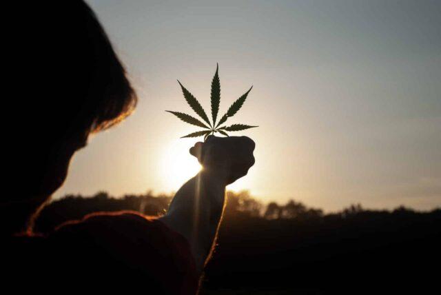 Situación legal de la marihuana en España